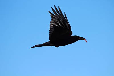 Urban Raven Poster