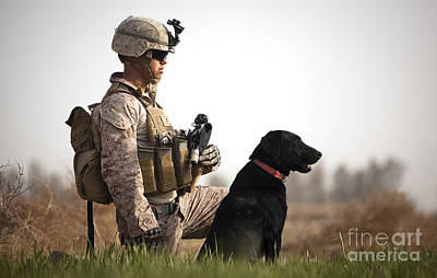 U.s. Marine Holds Security In A Field Poster by Stocktrek Images