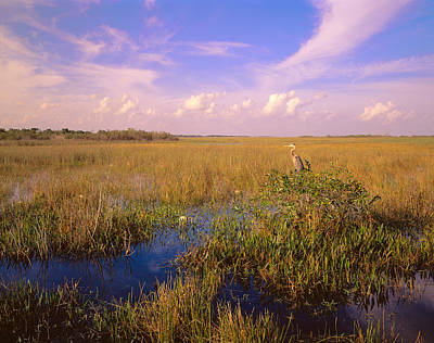 Usa, Florida, Everglades National Park Poster by Panoramic Images