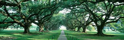 Usa, Louisiana, New Orleans, Brick Path Poster by Panoramic Images