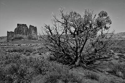 Utah Trees Arches National Park 01 Bw Poster
