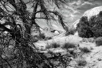 Utah Trees Arches National Park 05 Bw 01 Poster