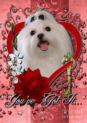 Valentines - Key To My Heart Maltese Poster by Renae Laughner