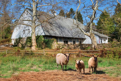 Valley Forge Sheep Farm Poster by Lori Deiter