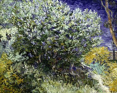 Van Gogh: Lilacs, 19th C Poster