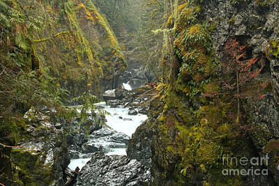 Vancouver Island Lush Canyon Poster by Adam Jewell