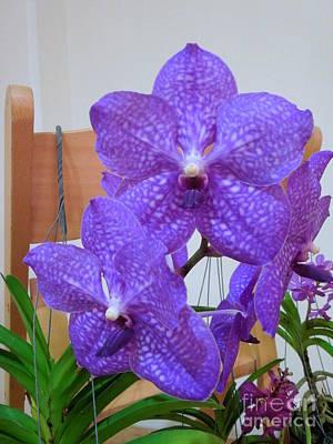 Vanda Orchid Poster