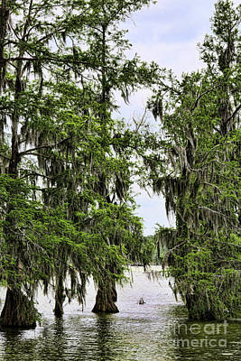 Veriticall Cypress Swamps Bayou Country  Poster