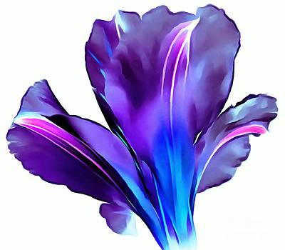 Vibrant Amaryllis Poster by Krissy Katsimbras