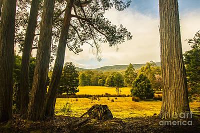 Vibrant Autumn Hillside Poster