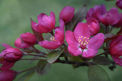 Vibrant Blooms Poster by Ann Bridges