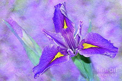 Poster featuring the photograph Vibrant Iris On Purple Bokeh By Kaye Menner by Kaye Menner