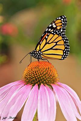 Monarch Butterfly On A Purple Coneflower Poster