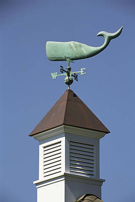 View Of A Sperm Whale Weathervane Poster by Darlyne A. Murawski