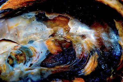 Vilano Sea Shell Constellation Poster by Gina O'Brien