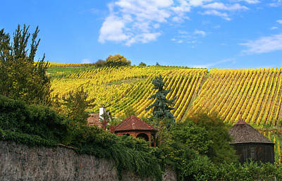 Village And Vineyards Of The Alsace Region Of France  Poster