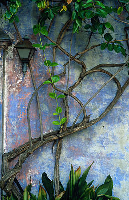 Vine And Wall Poster by Kathy Yates