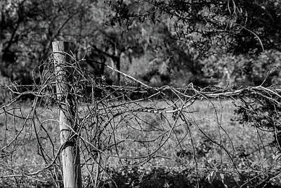Vine On Barbwire Poster