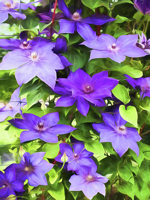 Vines Of Purple Clematis - Painterly Poster by Barbara McMahon