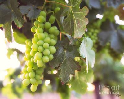 Vineyard 1 Poster