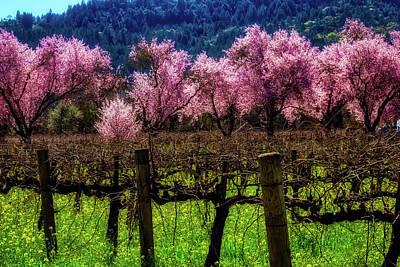 Vineyard Cherries Poster by Garry Gay