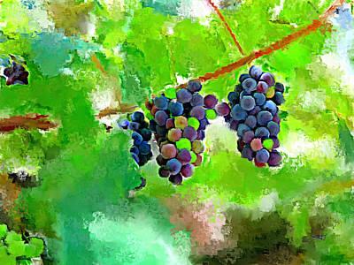 Vineyard Grapes Poster by Tim Tompkins
