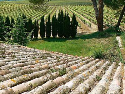 Vineyard In Spring Poster