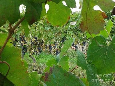 Vineyard  Poster by Iolanda Schena