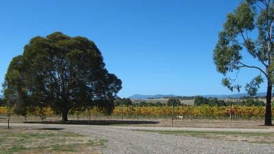 Vineyard Trees Poster