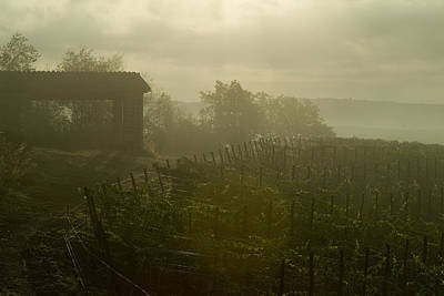Vineyards Beside A Villa In The Fog Poster by Todd Gipstein