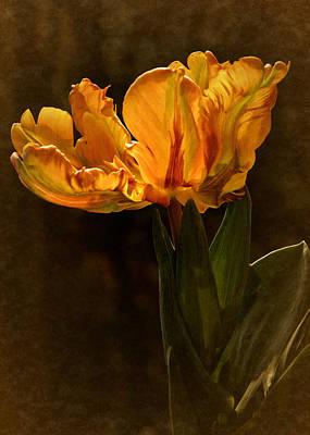 Vintage 2017 Tulip Poster by Richard Cummings
