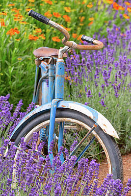 Poster featuring the photograph Vintage Bike In Lavender by Patricia Davidson