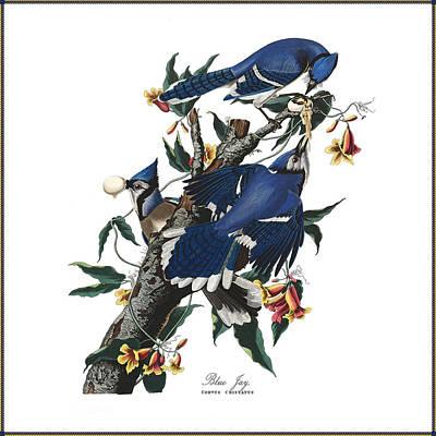 Vintage Blue Jays Audubon Poster