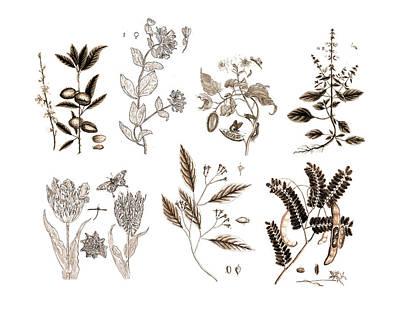 Vintage Botanicals In Sepia Home Decor Poster
