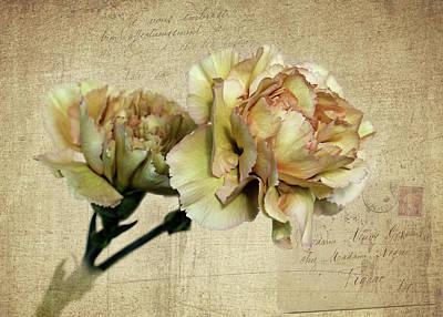 Vintage Carnations Poster