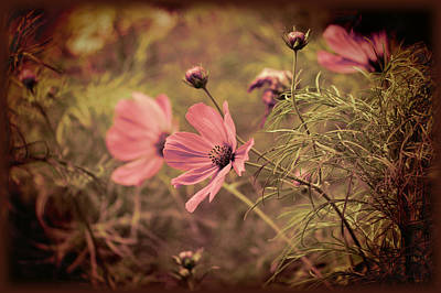 Poster featuring the photograph Vintage Cosmos by Douglas MooreZart