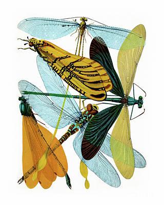 Vintage Dragonflies, Damselflies Etomology Illustration Poster by Tina Lavoie