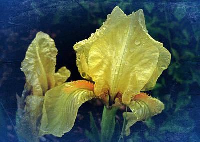 Vintage Dwarf Iris Poster by Richard Cummings