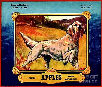 Vintage English Setter Apples Advertisement Poster by Peter Gumaer Ogden
