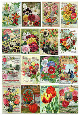 Vintage Flower Seed Packets 1 Poster by Peggy Collins