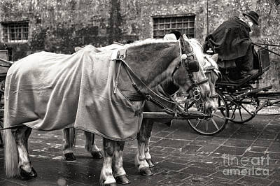 Vintage Horses In Salzburg Poster