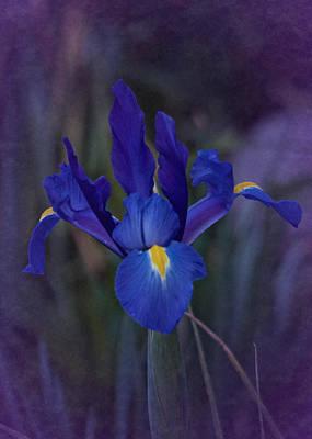 Vintage Blue Magic Iris Poster by Richard Cummings