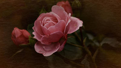 Poster featuring the photograph Vintage October Pink Rose by Richard Cummings
