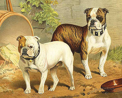 Vintage Painting Of English Bulldogs Poster by ArtworkAssociates