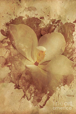 Vintage Paper Magnolia Poster by Jorgo Photography - Wall Art Gallery