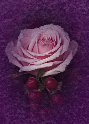 Poster featuring the photograph Vintage Pink Rose Feb 2017 by Richard Cummings
