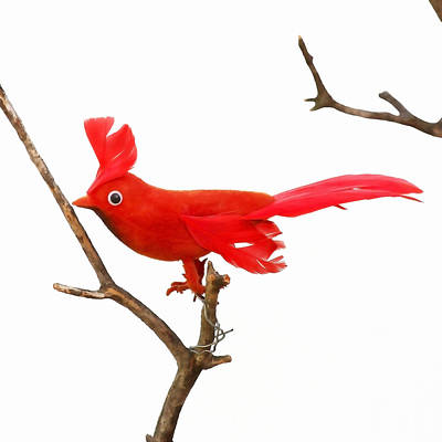 Vintage Red Cardinal Poster by Art Block Collections