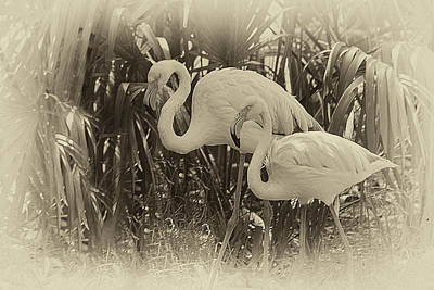 Vintage Rendition Of Flamingo Duo Strolling Among Tropical Folia Poster