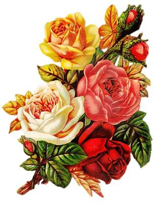 Poster featuring the digital art Vintage Rose I by Kim Kent
