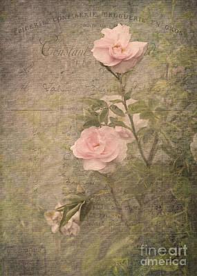 Vintage Rose Poster Poster by Liz  Alderdice